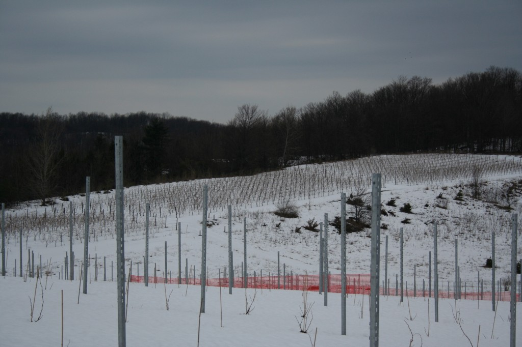 Hibernating Vines